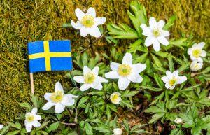 svenska - vitsippor och flagga